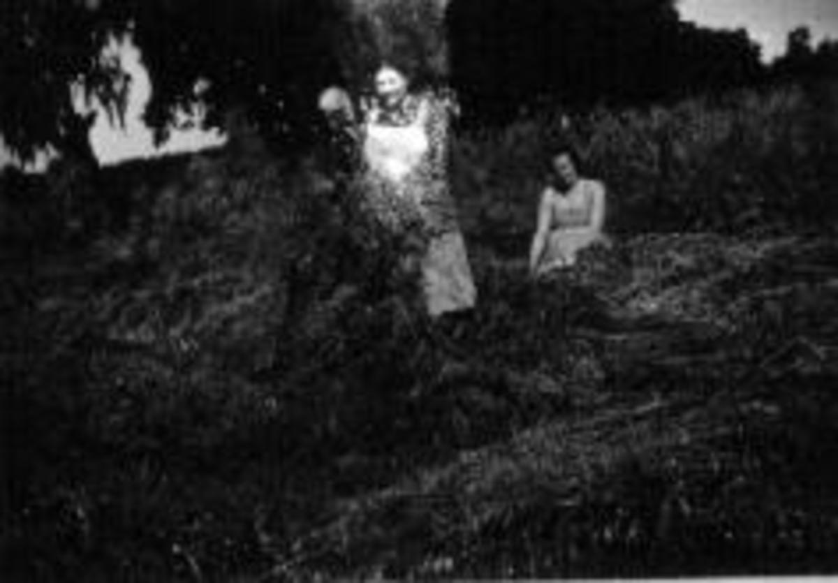 Skjæring av havre på Kirkejordet, Kise mellom, Fra venstre er Hanna Gjestvang, Anne Haugen, Kristiane Lise Mathea Haugen (1914-1995), gift med Leif Mengshoel.