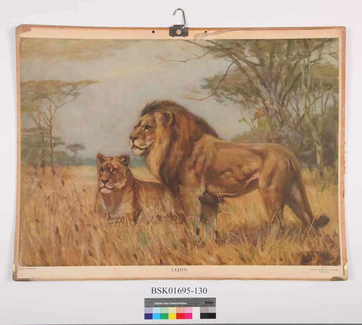 Løvepar