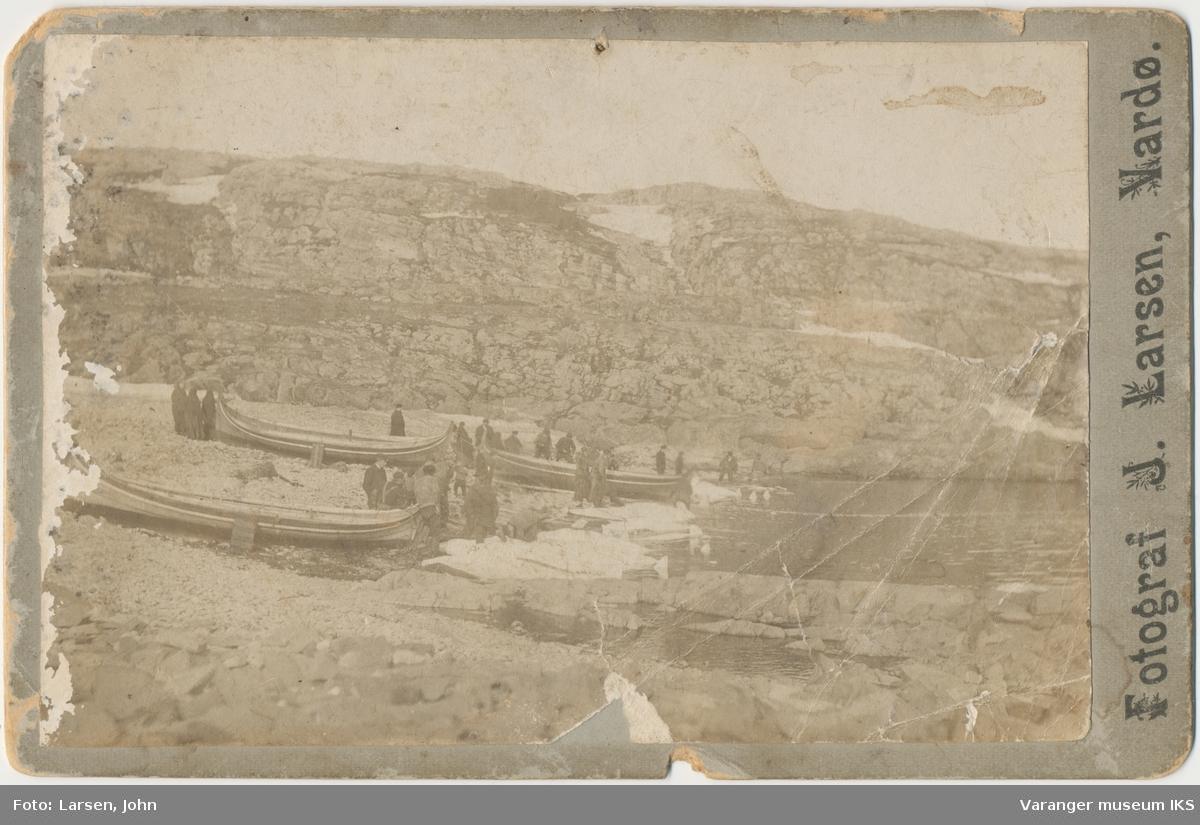 Hvithvalfangst i Russevika, Vardø, 1900