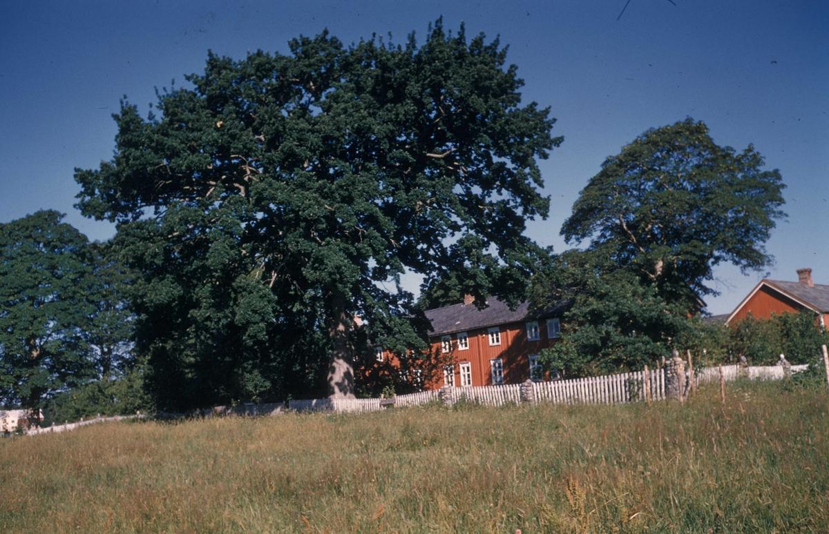 Eksteriør. Logstein gård på Frosta i Nord-Trøndelag.Bygd i 1818 av major Angell Coldevin.