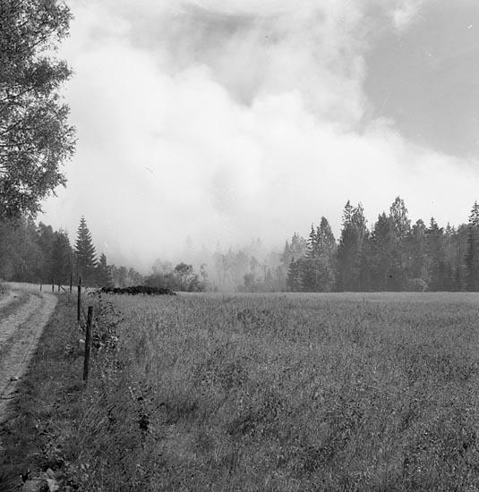 """Enligt notering: """"Skogsbranden Lane-Ryr 5-8-55""""."""