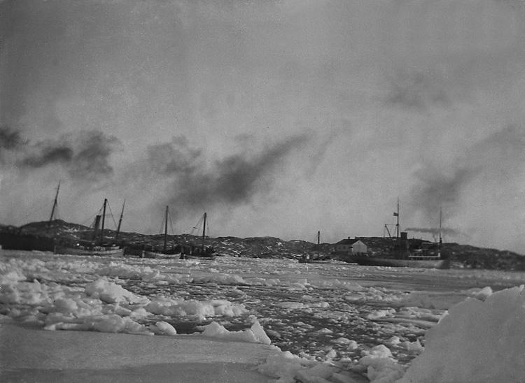 Bärgningsångaren FRITIOF assisterar fiskeflottan vid Marstrand 1924