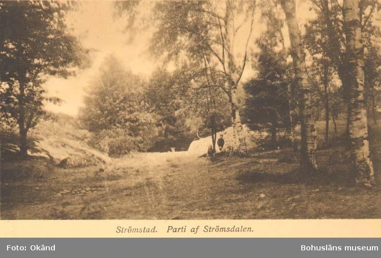"""Tryckt text på kortet: """"Parti af Strömsdalen. Strömstad."""" ::"""