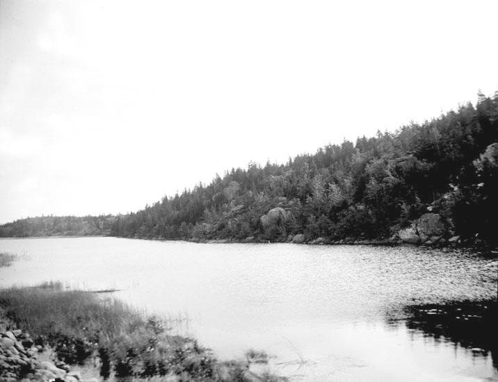 """Enligt fotografens noteringar: """"Partie från Burvattensjön."""" Plats: Uddevalla Datum: 21 Augusti 1895 Tid: Kl 9.45 f.m. Ljus: Solsken Bländare: No 1 Objektiv: Svenska Express Exponering: Hastighet No: 1 Framkallning: Hydrochinon, Eikonogen"""