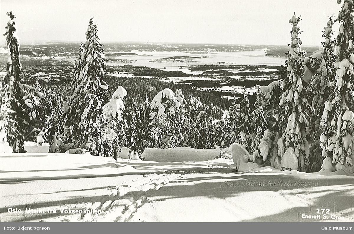 skog, snø, utsikt, by, fjord