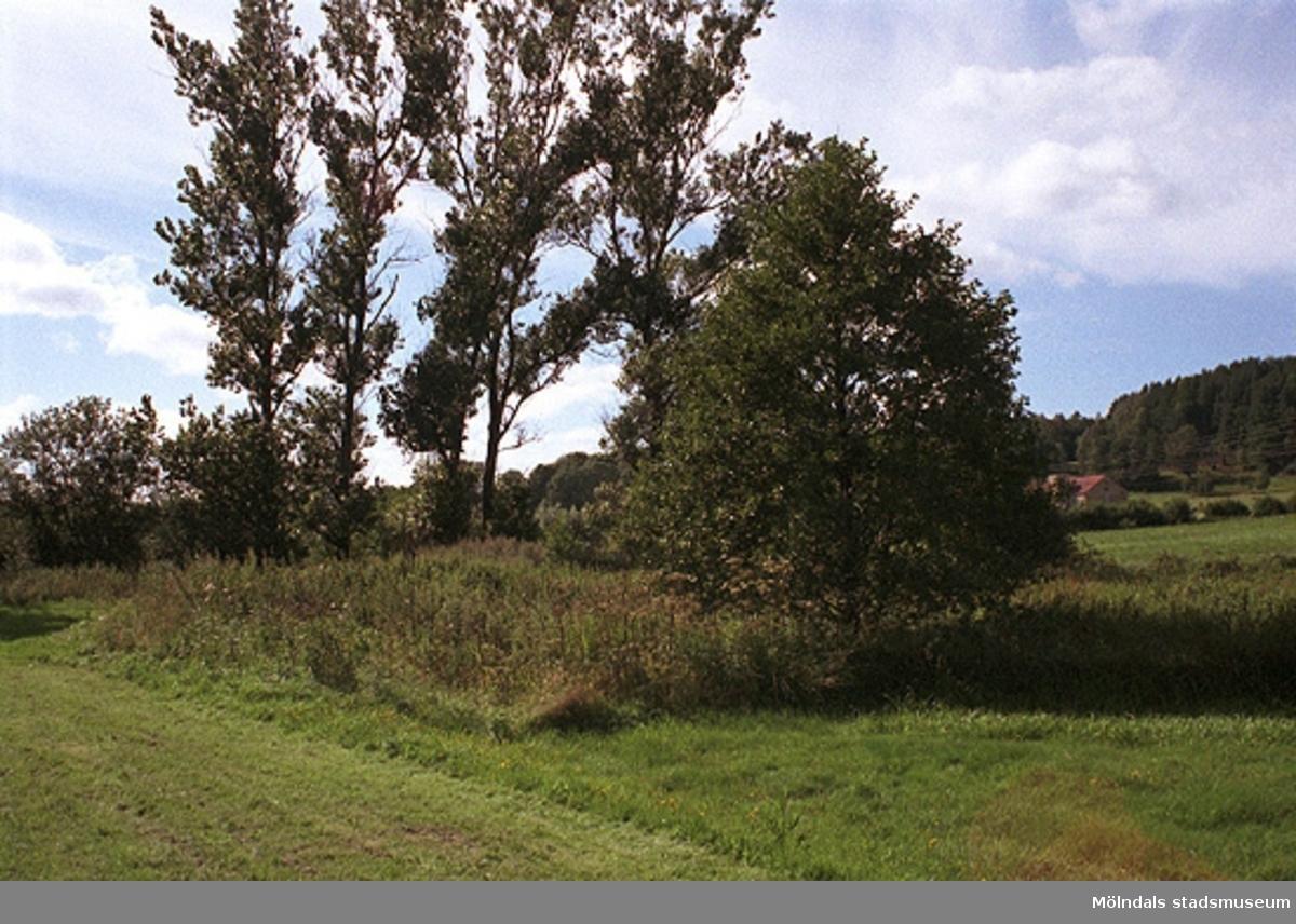 Dokumentation över Lindomeån inför en gång- och cykelväg på södra sidan om ån, 1998-08-19.