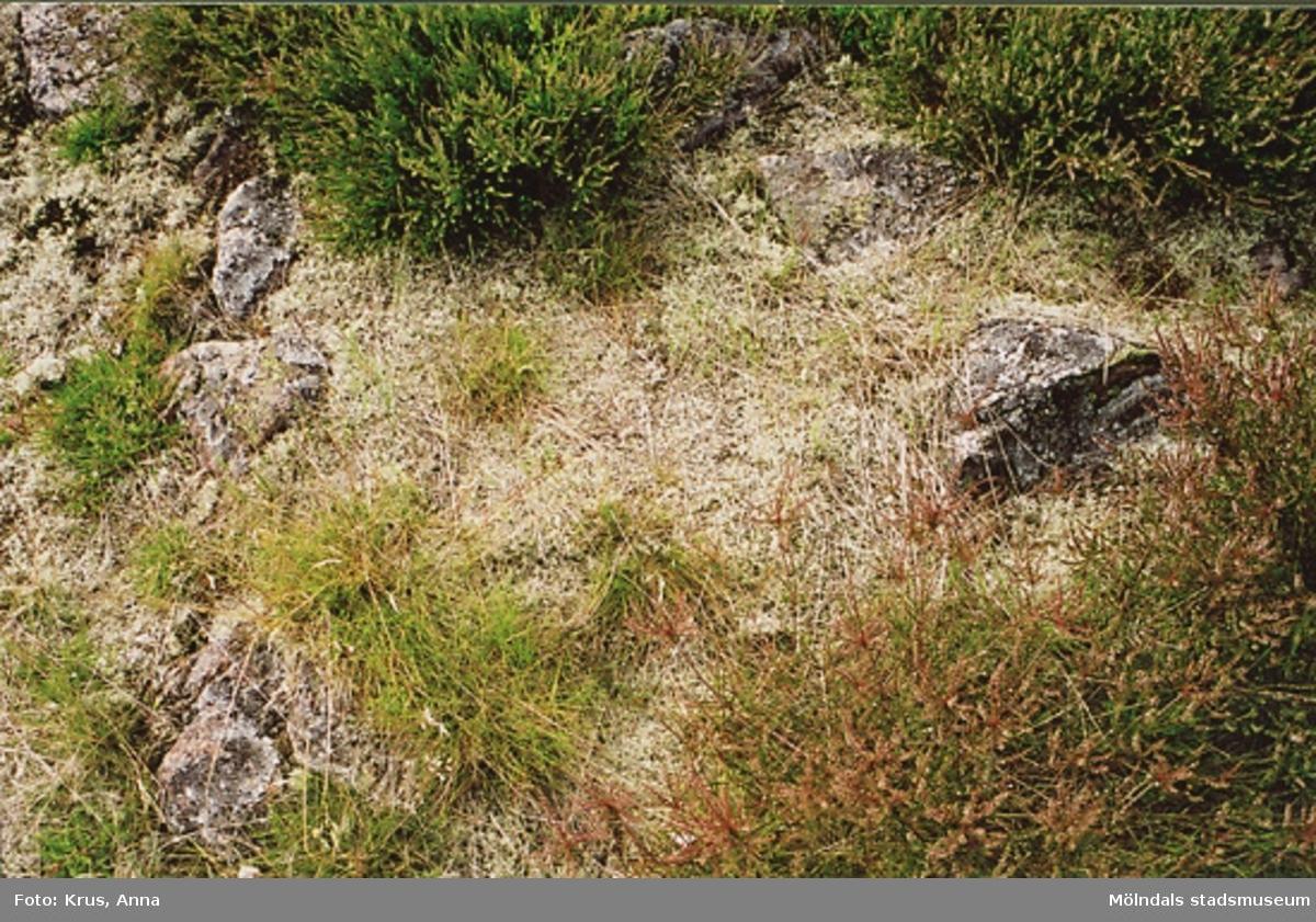 Västerberget - stensättning - nr. 7 på kartan i KMV-programmet.