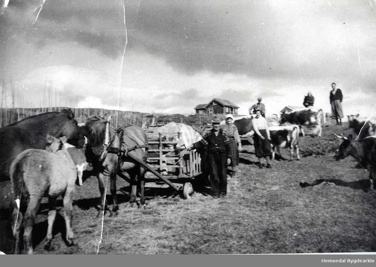 Flyttelass på Langehaugstølen i Hemsedal. Ola P. Langehaug (1876-1952) fremst. Dinest Liv Langehaug(1889-1975)