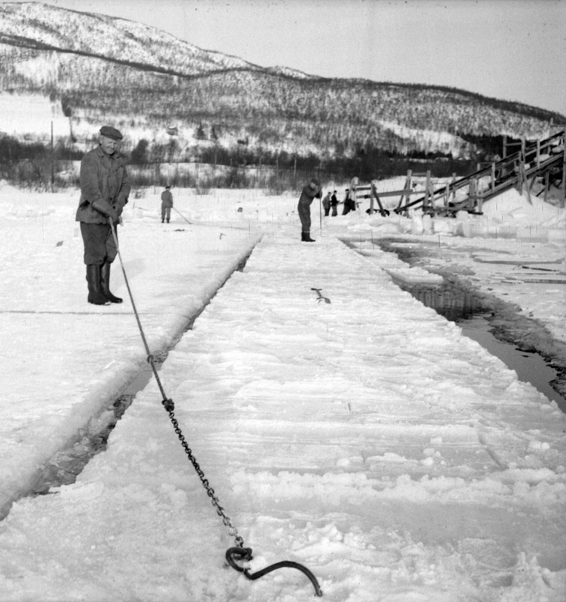 Isskjæring på Møkkelandsvannet, 1954. Isen skulle brukes hos Bertheus Nilsen i byen.