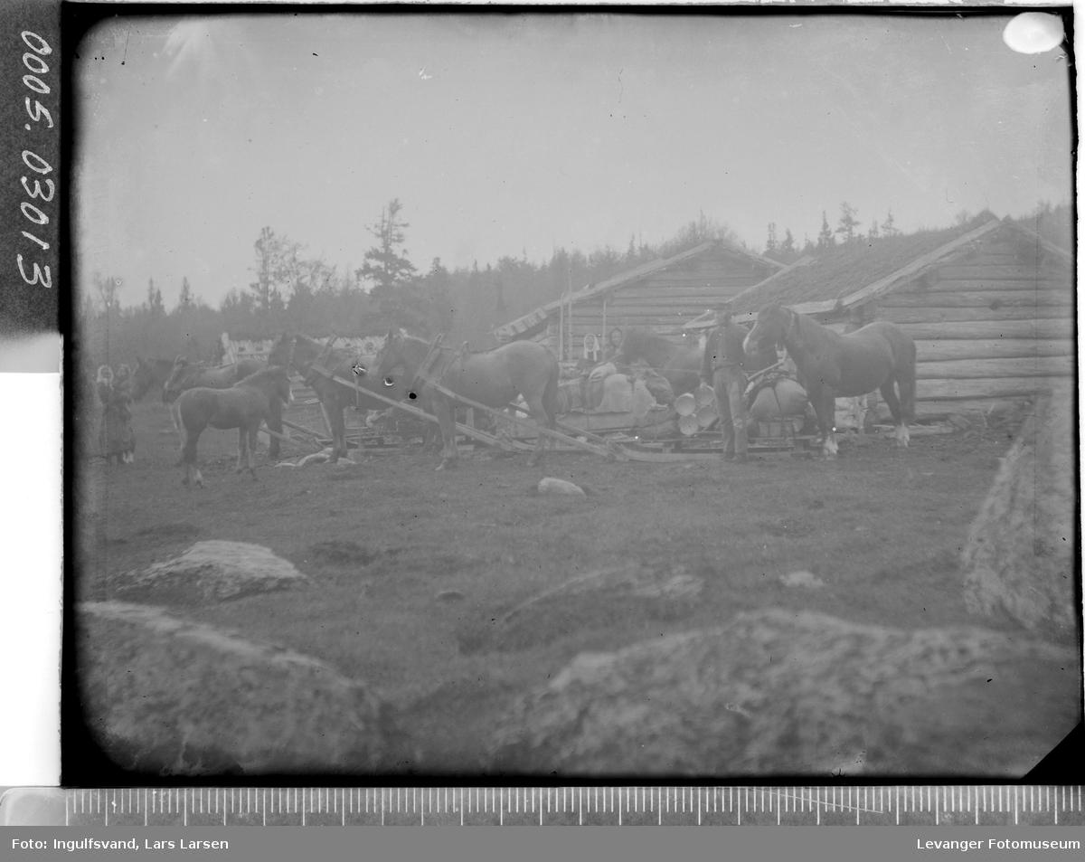 Hester og sleder på en seter.
