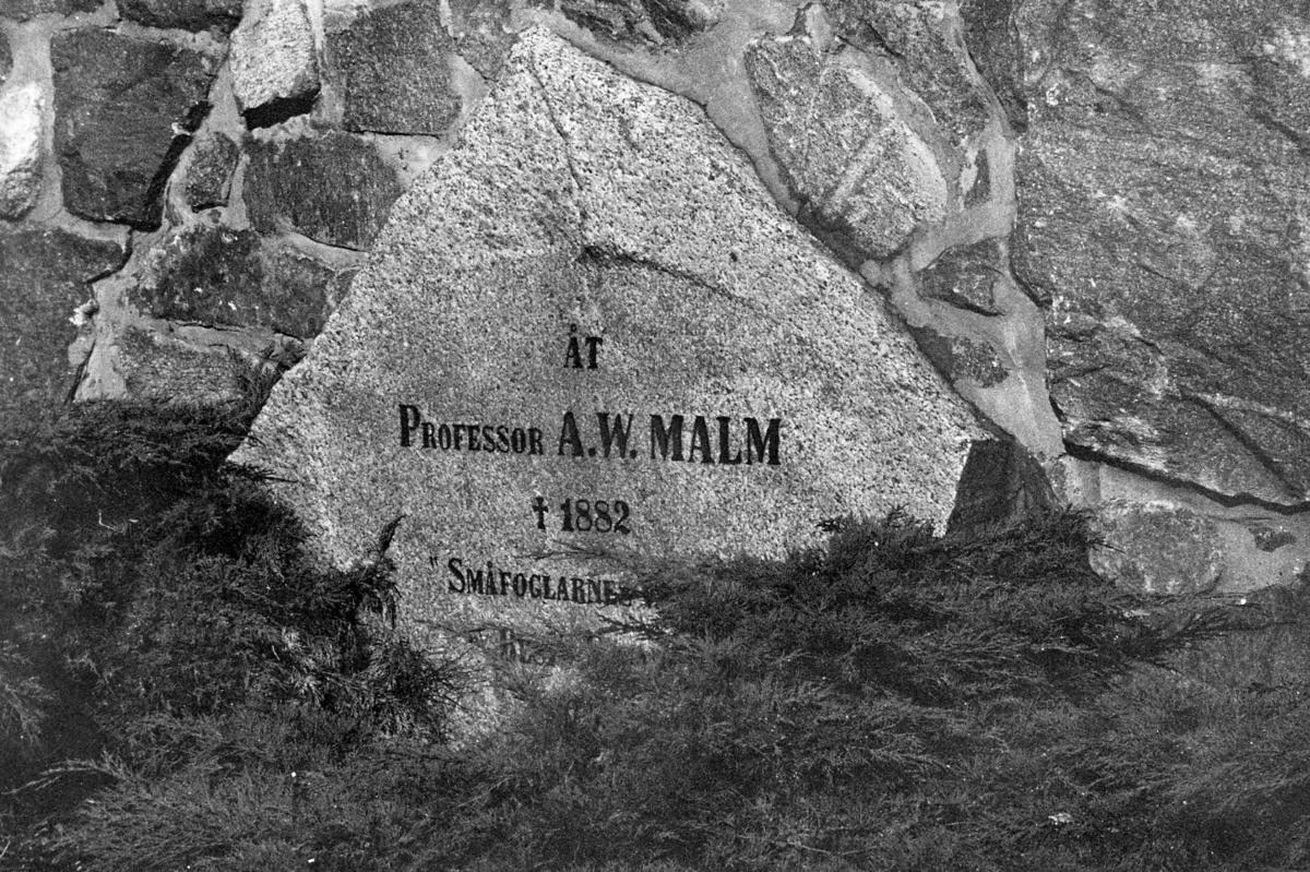 'Göteborgs Naturhistoriska museum oktober 1978: :: Stenblock i stensockeln med inskription - Åt Professor A.W. Malm, död 1882 ''Småfoglernas'' finns på södra sidan av Göteborgs Naturhistoriska Museum, nere i sydöstra hörnet av stensockeln. ::  :: Hela inskriptionen lyder - Åt Professor A.W. Malm, död 1882 ''Småfoglernas vänner'' :: A.W. Malm (levde 1821-1882)startade  första djurskyddsföreningen 1869 och kallade den ''småfåglarnas vänner'' ::  :: Ingår i serie med fotonr. 5527:69-216.'