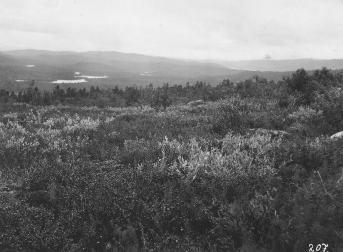 Jordbrukskomiteen på Stortinget foretok en reise til Finnmark i 1935. Kleppe var med, og ga bildene sine fra denne turen til fylkesmann Gabrielsen etter krigen. Her har Kleppe fotografert naturlandskap ved veien mellom Porsanger og Karasjok.