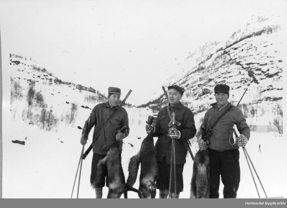 Dagens revefangst. Desse karane var spesialistar på å jakta på rev i nordbygda. Frå venstre: Emil O. Wøllo, Trond Wøllo og Ola O. Wøllo. Solhallet i bakgrunne