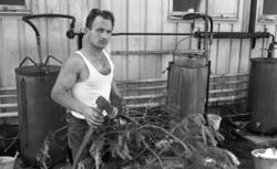 Loka brunn 22 juli 1966. Koknings av tallbarrsolja. De stor
