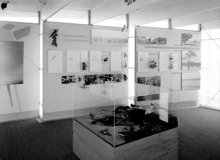 Fågelmuséet i Ottenby, interiör.