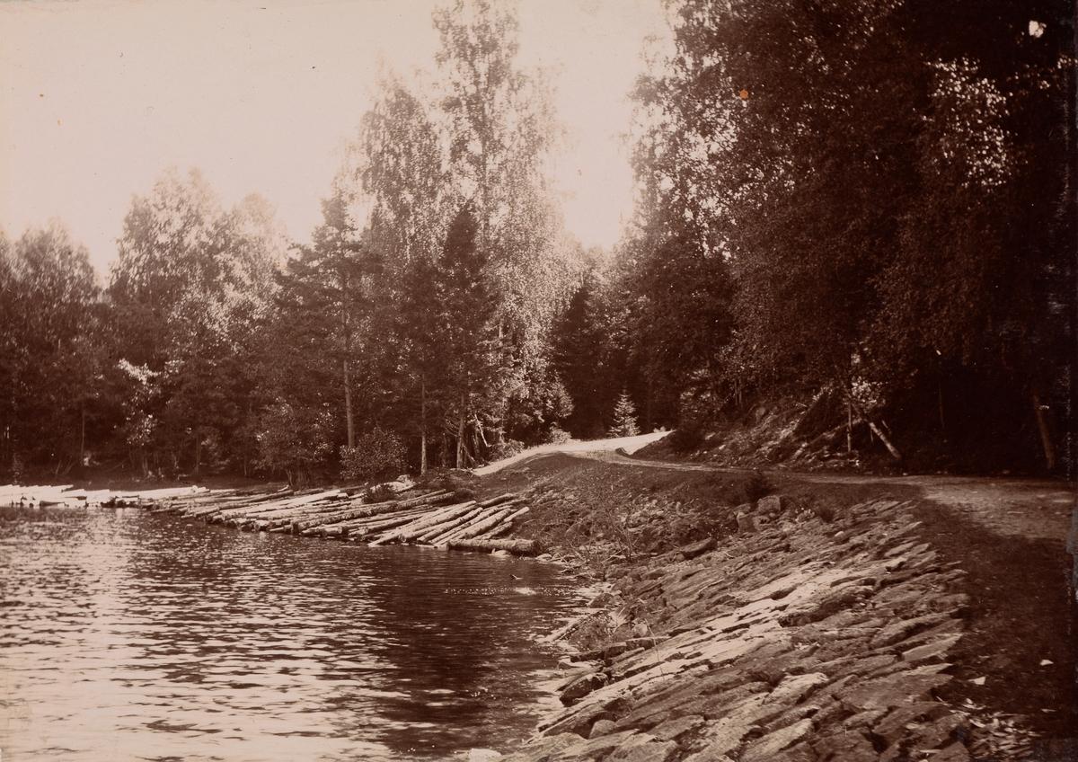 En vei langs vannkanten til en innsjø. I vannkanten ligger det tømmer.