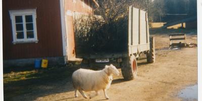 """Stillbilde fra filmen """"Odel"""". Foto/Photo"""
