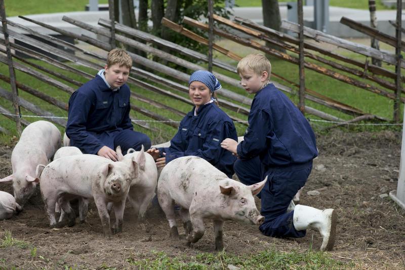 En jente og to gutter og hilser på fire små griser i Friluftsmuseet.