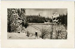 Postkort. Vinterlandskap med skog og kirkespir.