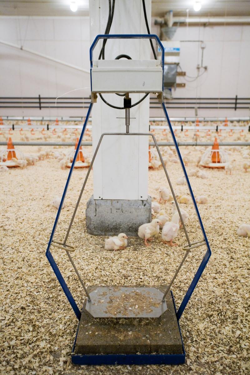 Utstyr i kyllingefarm