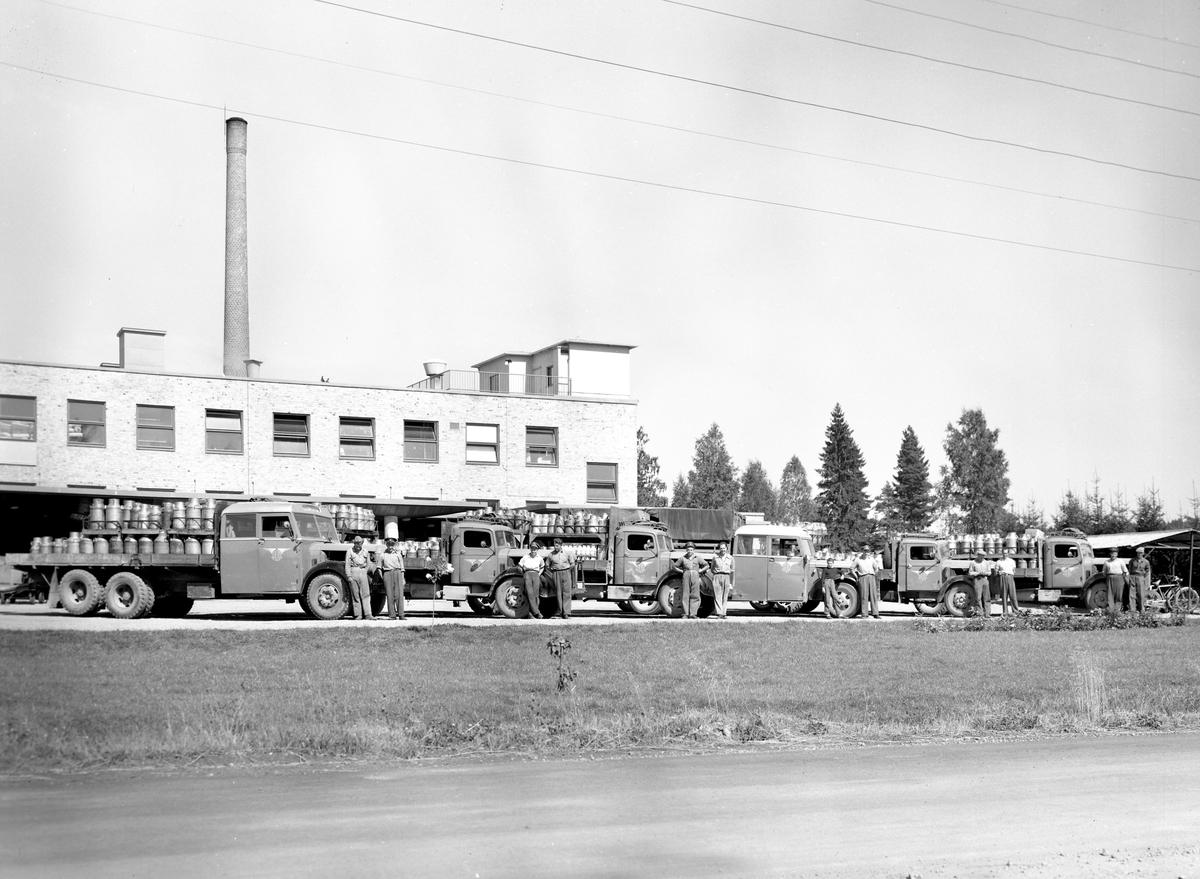 GDG:s flotta av mjölkbilar vid Arvika mejeri 53-08-14.