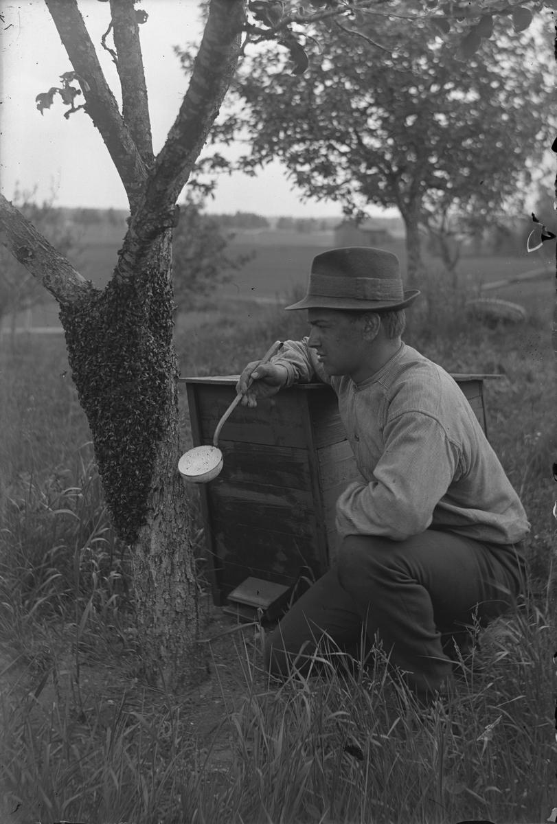 Enok Eriksson, f. den 4 januari 1896, d. den 2 juni 1964, med sin hobby biodling. Foto ca 1920.