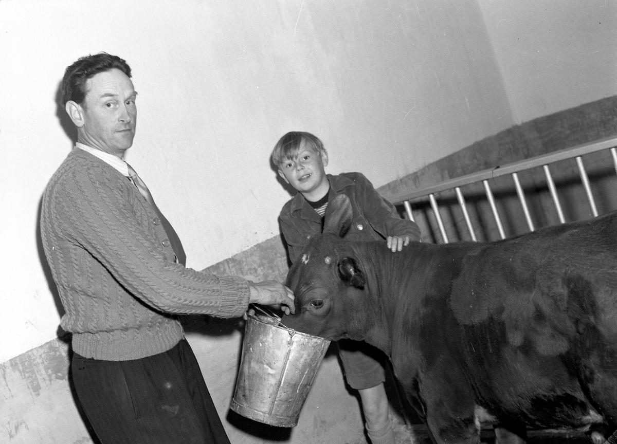 Lantbruksdag i Österfärnebo. Sundins gård i Backa. Kons. Larsson hushållningssällskapet. 30 juni 1950. Österfärneboreportage i Gefle Dagblad.
