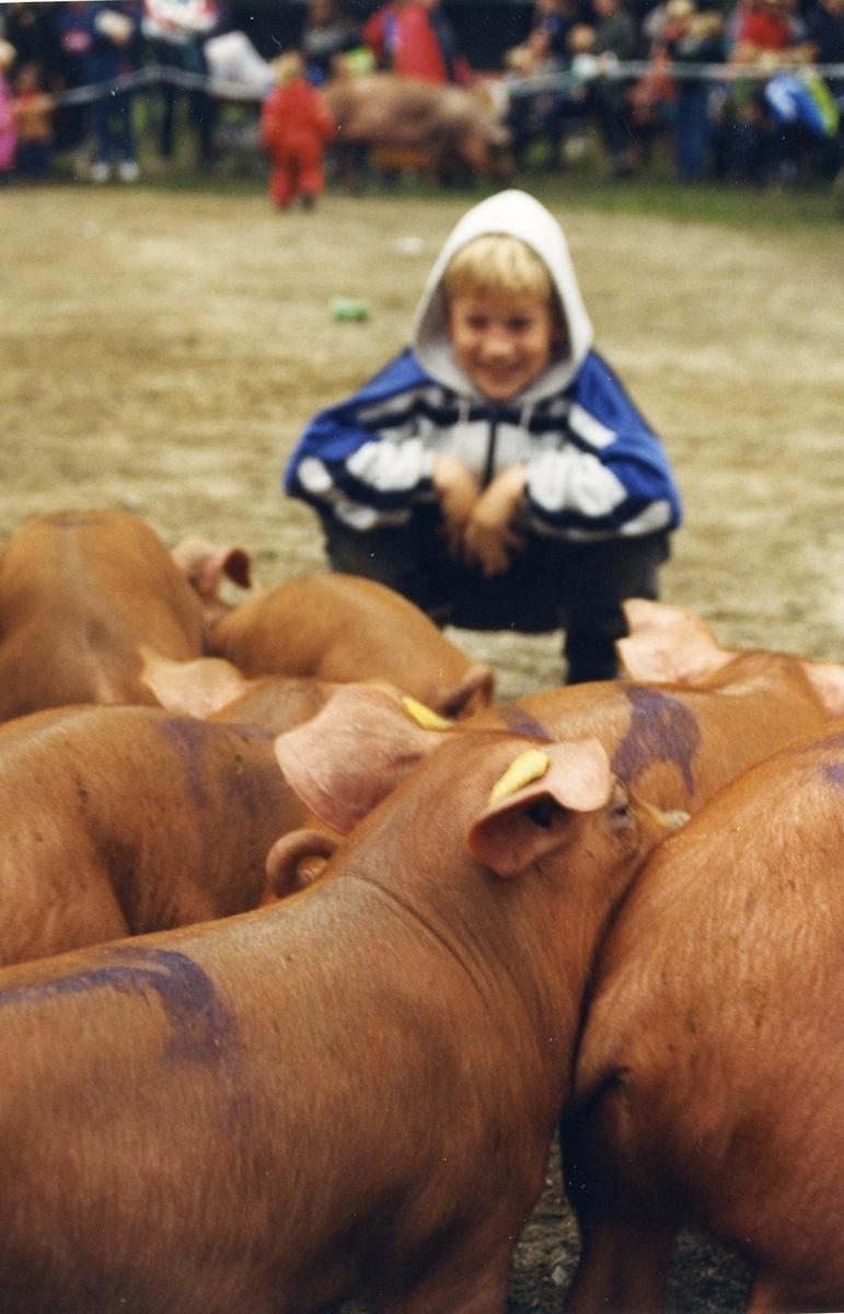 Gut med grisar