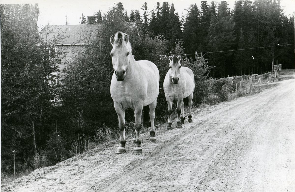 To fjordinger på Hedalsvegen.