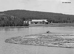 Fra Valmen i Osensjøen under tømmerfløtinga i 1981.  Fotogra