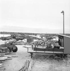 Barkmaskiner vid Vivstavarv. Fotograferat för Stig Morenius