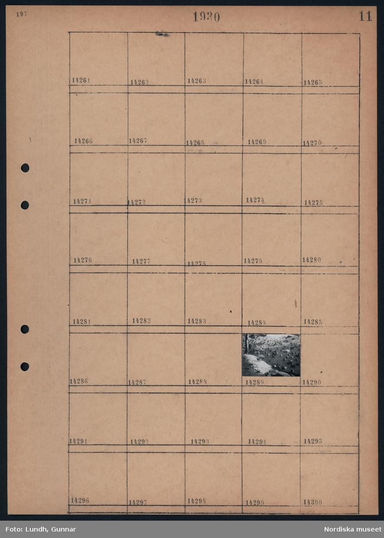 Motiv: Svanar, Spetsbergsgäss; Svanar och gäss vid en damm