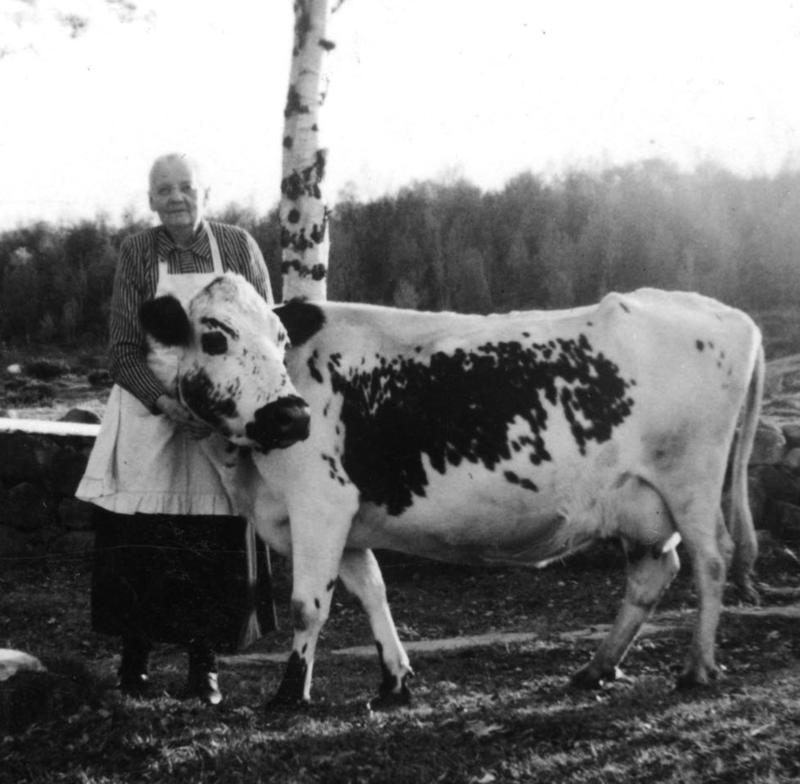 Oline Wintervold på setra (Foto/Photo)