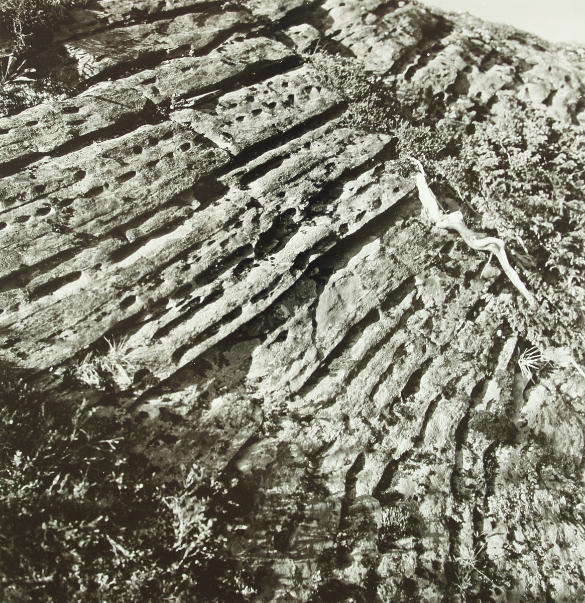 En lång stenhäll sträcker sig genom bilden. Stenen har rader med horisontella fördjuningar samt lav och mossa växer på den.