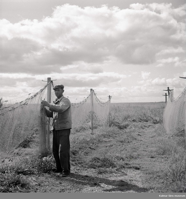 En fiskare tar ner garn från spetraden vid Stensö fiskeläge.