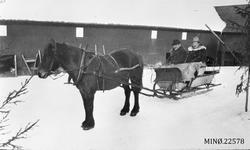 Hest og slede menn to menn. Gjermund og P.K. Grindflek kjøre