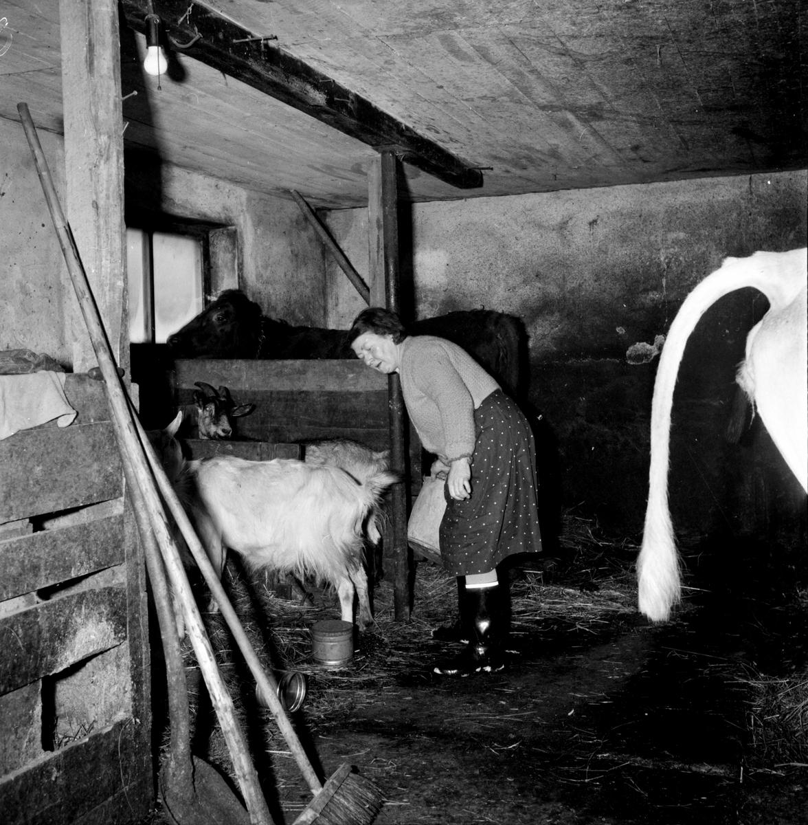 Blybergsbo, Bernt Hedberg med hästen, Ragnar Johansson, Flugbo