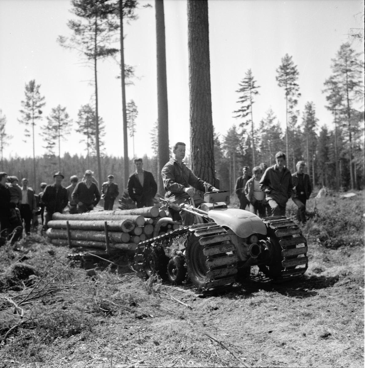 Timmerbjörn demonstreras, 5 Maj 1965
