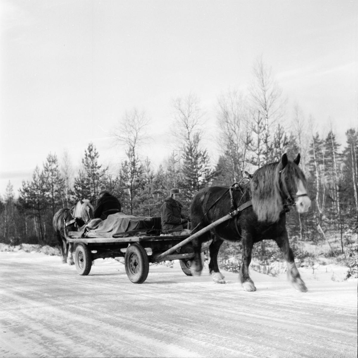 Skolbarn, affären, skogskörare i Skräddrabo. 18/1 1957