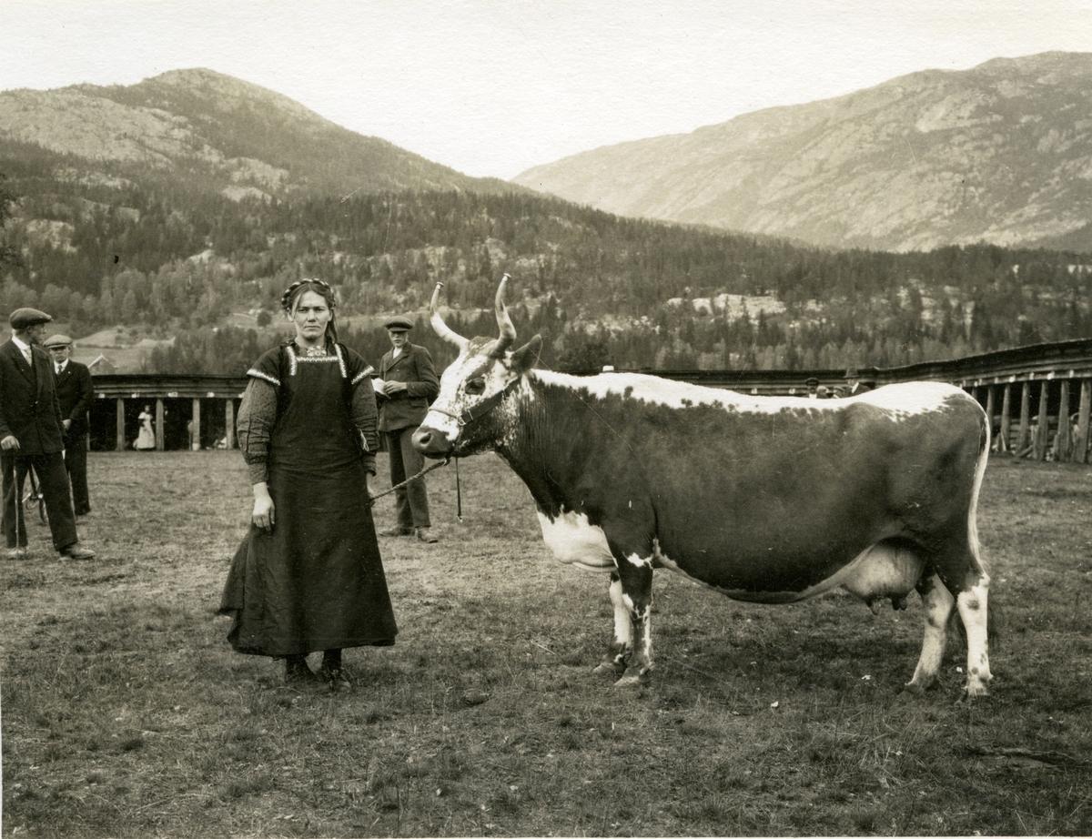 Kua Gulkrona fotografert saman med Aslaug T. Staurheim på Dyrskuen i Seljord.