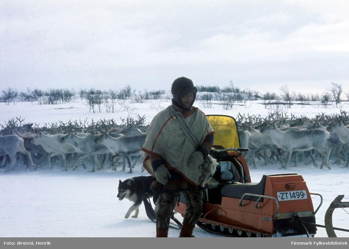 """Postfører Mathis Mathisen Buljo, bedre kjent som """"Post-Mathis"""" i samiske kretser, har kommet frem til reindriftssamer som er i arbeid ute på Finnmarksvidda.   Fotograf Henrik Ørsteds bilder er tatt langs den 30 mil lange postruta som strakk seg fra Mieronjavre poståpneri til Náhpolsáiva, videre til Bavtajohka, innover til øvre Anárjohka nasjonalpark som grenser til Finland – og ruta dekket nærmere 30 reindriftsenheter. Ørsted fulgte «Post-Mathis», Mathis Mathisen Buljo som dekket et imponerende område med omtrent 30.000 dyr og reingjetere som stadig var ute i terrenget og i forflytning. Dette var landets lengste postrute og postlevering under krevende vær- og føreforhold var beregnet til 2 dager. Bildene gir et unikt innblikk i samisk reindriftskultur på 1970-tallet. Fotograf Henrik Ørsted har donert ca. 1800 negativer og lysbilder til Finnmark Fylkesbibliotek i 2010."""