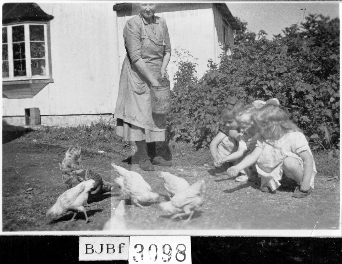 Diana Kristine Jensen forer hønene, Bjugn