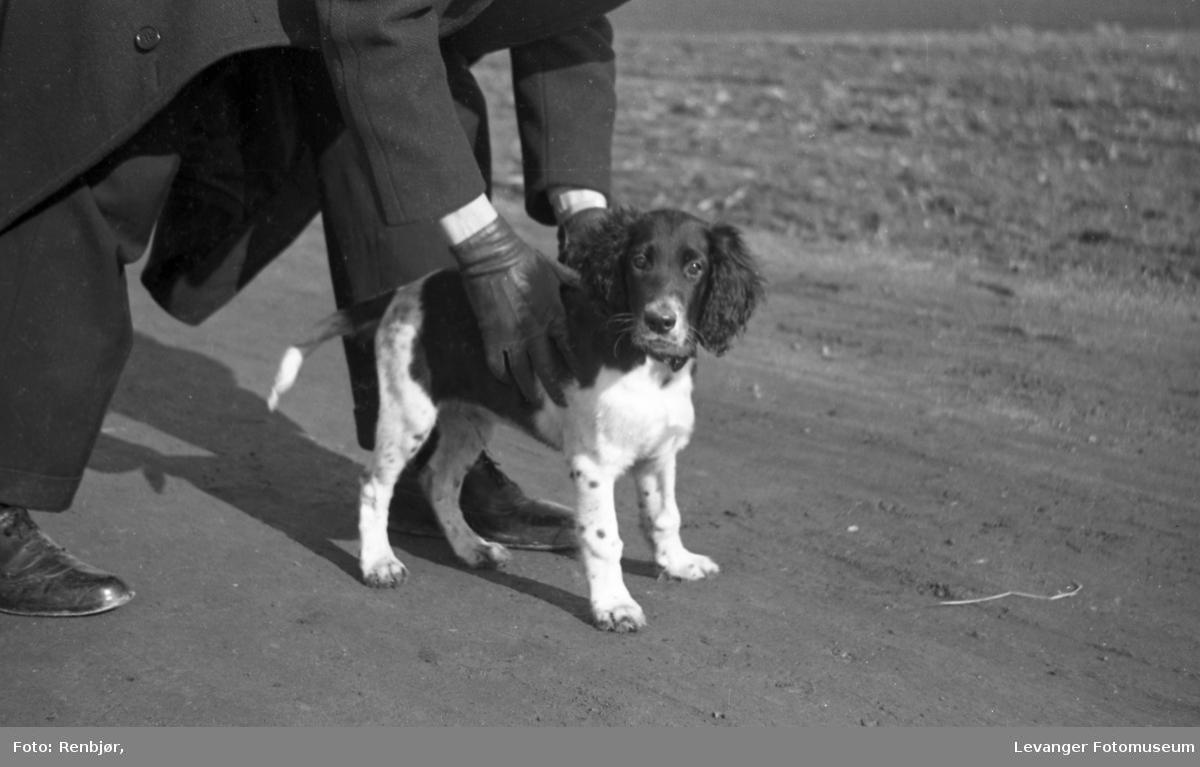 Hunded til Ertsaas.
