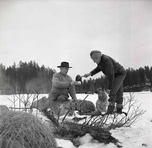 Hilding bjuder Albert på kaffe på Sillratjärns is och Alberts hund Nicko sitter bredvid, 4 april 1964.