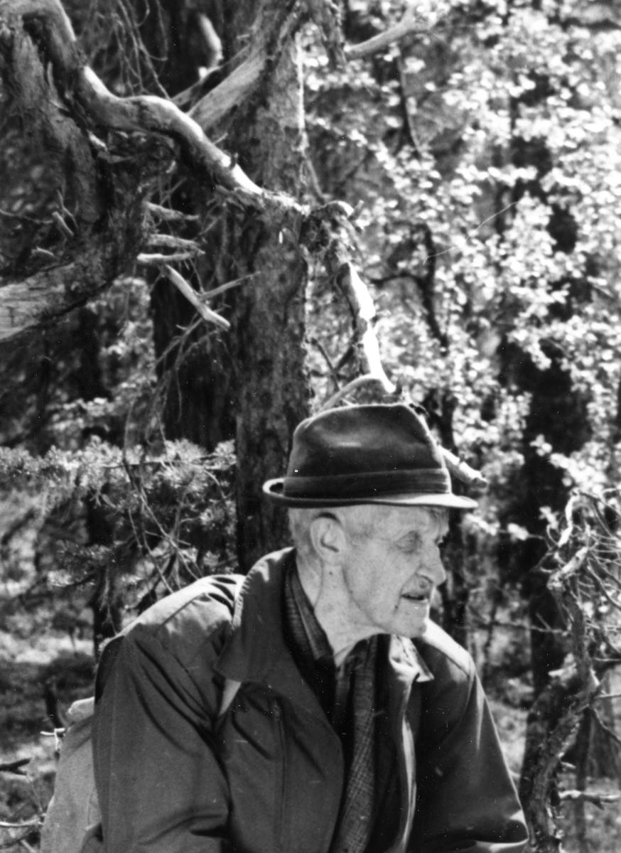 Mikkjel Fønhus i urskogen ved Gutulisetra
