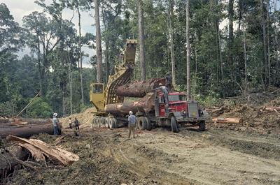 Bilde er av tropisk skogbruk ved Davao på øya Mindanao på Filipinene i 1968
