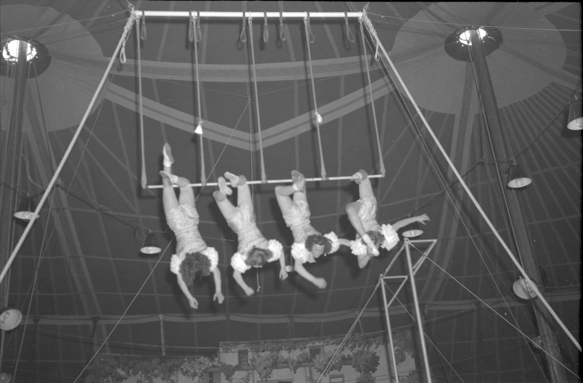 Furuviksparken invigdes 1936  1950 var ett år då Furuviksparken investerade kraftigt.  Cirkus Trapetskonster