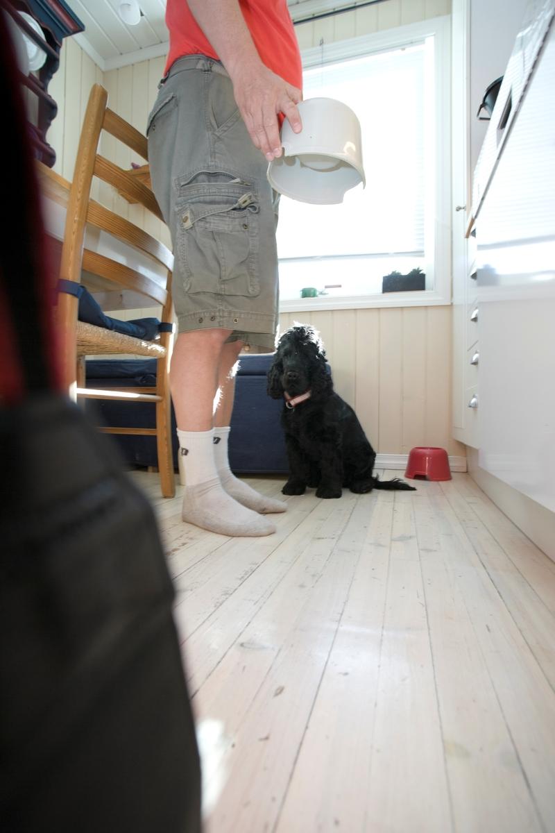 Hunden E,mmy venter på å få mat fra sin eier.