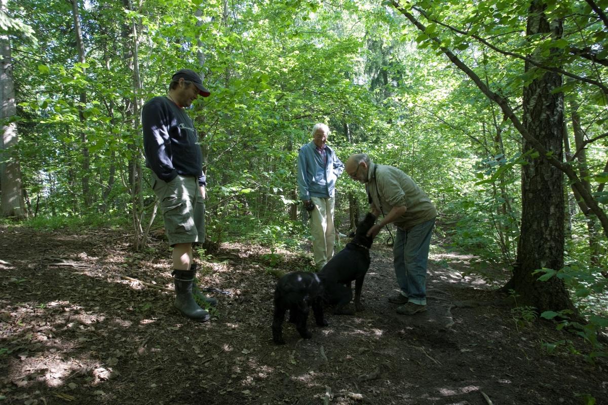 Hunden Emmy på tur treffer andre hunder og hundeeiere.