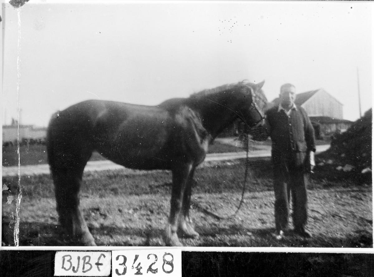 Tysk smed,  August Werner med hest
